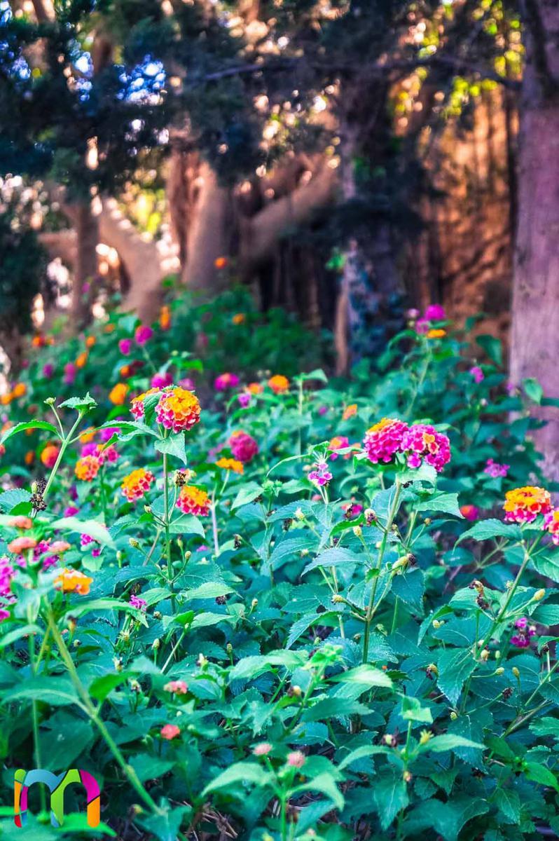 flores-parque-torres